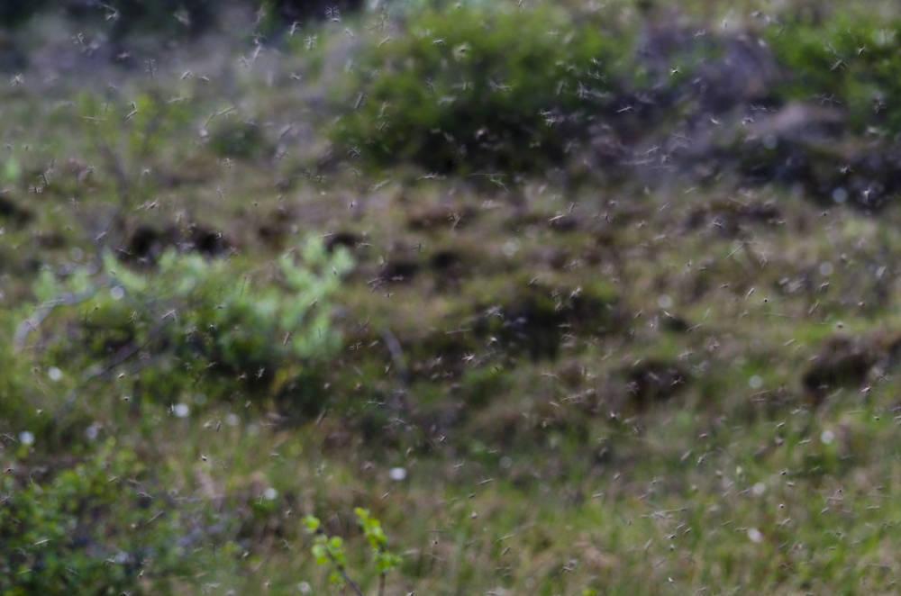 Plagas de mosquitos en Benicarló